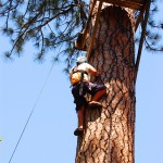 High Ropes: Leap of Faith Element
