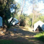 Canvas Cabin Tents: F, H, G