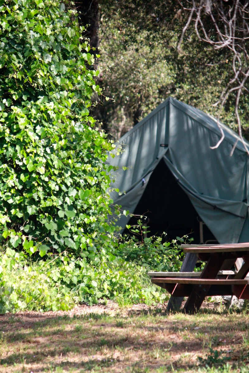 Canvas Cabin Tents Mother Lode River Center